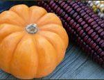 Haunted Harvest - October 9-11